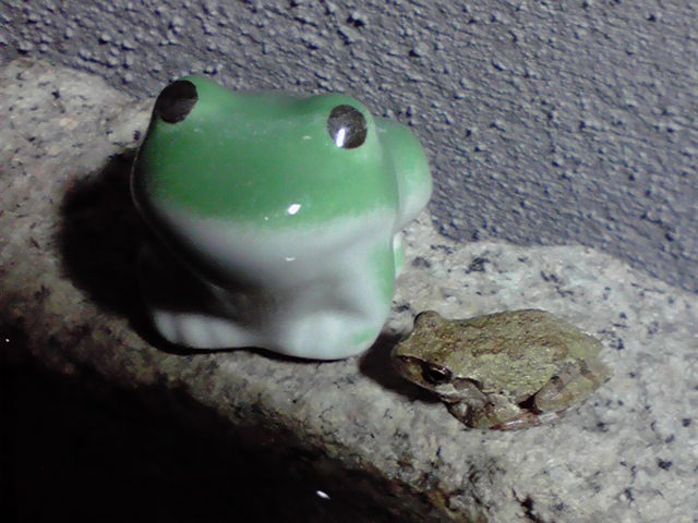 カエルの兄弟